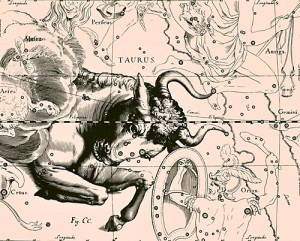 taurus_constellation_uranographia